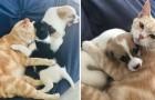 Het verhaal van Kathryn, de kat die besloot puppy's te adopteren alsof ze haar kinderen waren