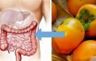 De gunstige eigenschappen van kaki's, seizoensfruit dat goed is voor ons lichaam
