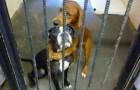 Queste 2 cagnoline si abbracciano disperate poco prima di essere soppresse: la foto commuove un uomo che le adotta