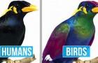 Deze afbeeldingen laten het verschil zien tussen hoe wij de wereld als mens zien en hoe vogels hem zien