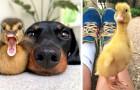 15 schöne Bilder, die die lustigste Seite von Enten zeigen