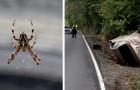 Sie bemerkt eine Spinne auf dem Beifahrersitz und kommt von der Straße ab: die arachnophobe Fahrerin bleibt unverletzt