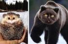 De kop van een kat en het lichaam van een ander dier: 20 angstaanjagende en tegelijkertijd grappige afbeeldingen