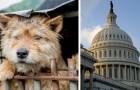USA: l'abuso intenzionale verso gli animali sarà un crimine perseguibile dalla legge federale