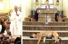A messa con i cani: questo sacerdote porta con sé i suoi amici randagi per aiutarli a trovare una casa