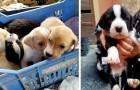 Napoli, salvati 9 cuccioli abbandonati all'interno di un cassonetto: adesso hanno tutti una nuova famiglia
