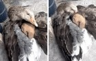 A mother goose offers shelter to a young puppy dog whose life was at risk due to the freezing cold