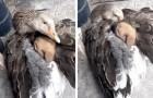 Een gans biedt een schuilplaats aan een pup die door de kou zou kunnen bevriezen