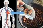Kastanje, herfstvrucht rijk aan vitamines en mineralen die essentieel zijn voor de gezondheid van ons lichaam