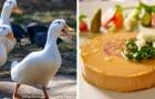 Troppa sofferenza per anatre ed oche: New York mette fuori legge il foie gras