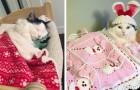 Haar voormalige eigenaar heeft haar mishandeld: nu slaapt deze kat gelukkig in haar bedje en heeft zelfs haar eigen knuffels