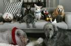 Un homme a décidé d'adopter tous les vieux chiens de refuges qui ne trouvaient pas de famille