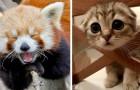 16 photos d'animaux de compagnie pleines de sympathie et de tendresse