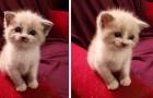 Ce chaton adopté fait un sourire adorable à sa nouvelle maîtresse chaque fois qu'elle prend une photo d'elle