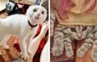 Deze 18 foto's laten zien dat katten een onfeilbare remedie zijn voor een slecht humeur