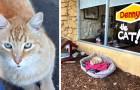 Après avoir été abandonné, ce chat a été adopté par un restaurant et ses clients