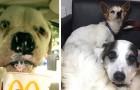 Esta mujer ha creado un refugio para perros en su casa: los acompaña con afecto hasta el final de sus días
