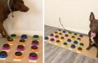 Dankzij een elektronisch apparaat heeft deze hond geleerd om als een 2-jarig kind met haar baasje te communiceren