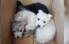 A Benevento, un netturbino salva 3 cuccioli di cane che erano stati abbandonati in un sacco della spazzatura