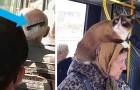 La stranezza viaggia sui mezzi pubblici: 15 esilaranti foto di personaggi originali su tram, metro e bus
