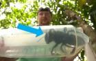 On la considérait éteinte, mais la plus grande abeille du monde a été retrouvée vivante 38 ans après sa disparition
