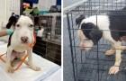 Enfermé dans une cage et jeté dans un lac glacé, ce chien a été sauvé par un homme généreux