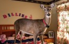 Dillie the Deer: an emotional story!