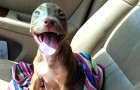This little dog gives everyone an adorable smile as she leaves the animal shelter to go to her new family