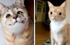 15 animali domestici che nessuno voleva per la loro particolarità ma che alla fine hanno conquistato tutti