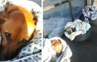 Die Mitarbeiter dieser Busstation bieten streunenden Hunden mit Decken und Reifen Schutz