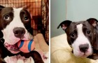 Ce pauvre petit chien a été abandonné par sa famille humaine car un bébé allait naître