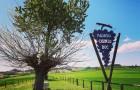 Il Bialbero di Casorzo: in Piemonte un ciliegio è cresciuto sopra un gelso, incantando migliaia di turisti