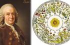 De bloemenklok die de tijd aangaf naar het openen van de bloemen: het poëtische idee van Carl Linnaeus