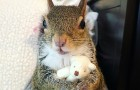 Nadat ze is gered door een orkaan, laat deze schattige eekhoorn haar teddybeer nooit in de steek