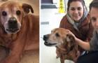 Deze oudere hond was in een asiel terechtgekomen en wachtte 3 lange jaren voordat iemand hem adopteerde