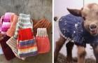 In questa fattoria i cuccioli di capra indossano caldi maglioni di lana per proteggersi dal freddo