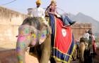 Cambodge : à partir de 2020, les éléphants ne seront plus utilisés pour transporter les touristes étrangers