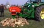 So entfernt man effizient einen Baumstumpf