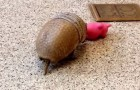 Anche gli armadilli amano i loro giocattoli