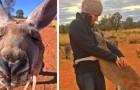 Cada día este canguro huérfano abraza a los voluntarios del refugio que hace 12 años le han salvado la vida