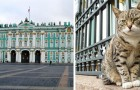 Les chats de l'Ermitage : depuis plus de 200 ans, ils protègent le prestigieux palais de l'invasion des souris