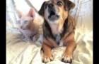 Il demande à son chien qui est son meilleur ami, il reçoit une très belle réponse...