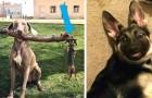 12 berauschende Fotos von Hunden, die ihre komische Seite unterstreichen