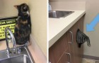 15 foto mostrano le reazioni più buffe dei gatti che tentano di nascondersi pur di non andare dal veterinario