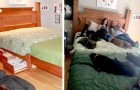 This couple has built a special bed for all the dogs saved from animal shelters that now live with them at home