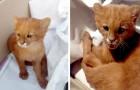 Ze redt een kitten van de weg, maar na twee maanden komt ze erachter dat het een poema is