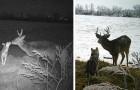 Vídeo de Cervos