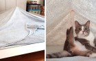 20 fotos que confirman cuanto nuestros gatos domésticos tienen un extraño sentido del humor