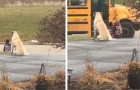 This dog sits next to his owner's little girl and waits with her until the school bus arrives and departs