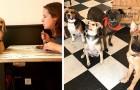 Ce café français permet aux clients de se faire des amis avec des chiens abandonnés et de les adopter